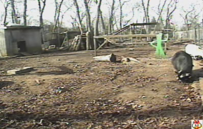 Popeye's chicken yard photo 3