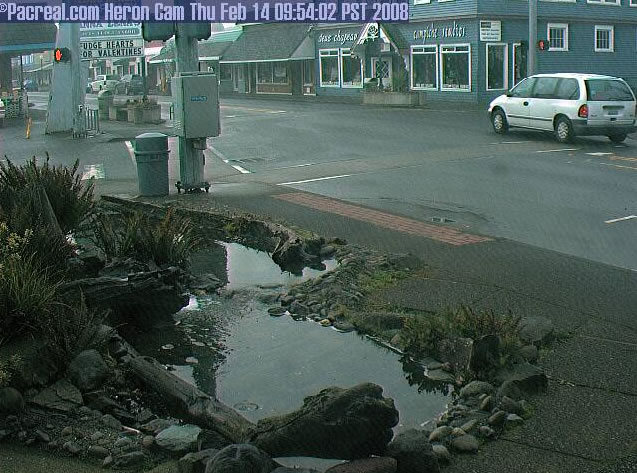 Long Beach Heron Cam photo 5