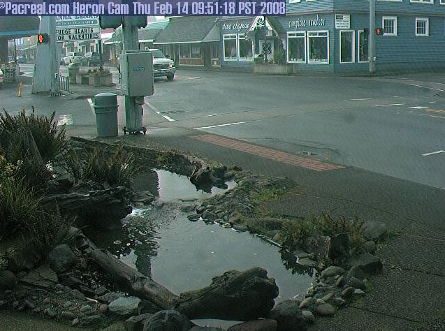 Long Beach Heron Cam photo 4