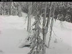 Vindelns Forsoksparker Skogsfakulteten photo 3