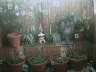 Garden Bubble Cam photo 1