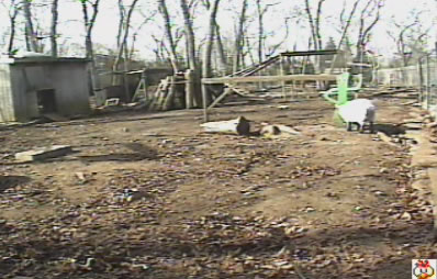 Popeye's chicken yard photo 2