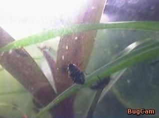 BugCam  photo 3