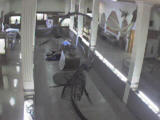 Museum of Geology - Dino Cam photo 1