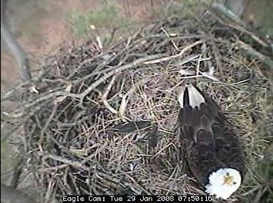 Eagle cam photo 4