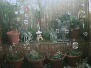 Garden Bubble Cam photo 4