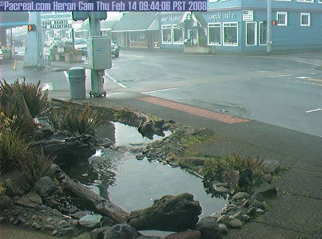 Long Beach Heron Cam photo 1