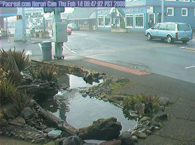 Long Beach Heron Cam photo 2