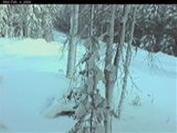 Vindelns Forsoksparker Skogsfakulteten photo 4