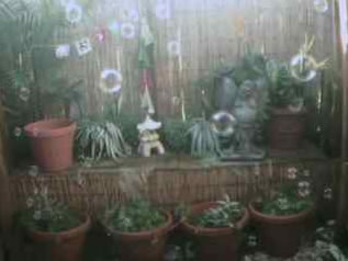Garden Bubble Cam photo 3