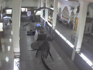 Museum of Geology - Dino Cam photo 2