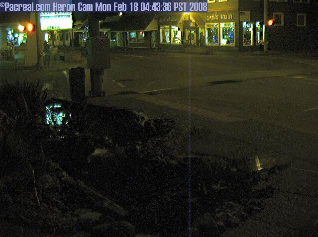 Long Beach Heron Cam photo 6