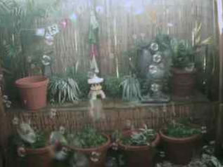 Garden Bubble Cam photo 2
