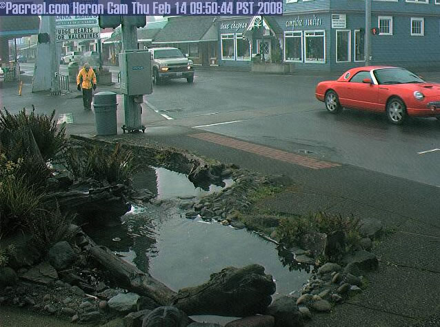 Long Beach Heron Cam photo 3