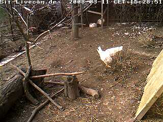 Chicken webcam photo 1