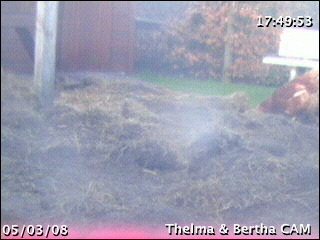 Thelma & Louis webcam photo 2