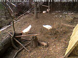 Chicken webcam photo 2