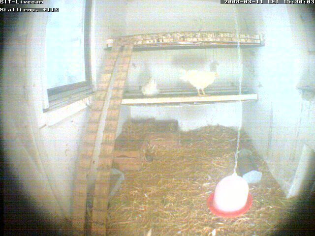 Chicken webcam photo 5