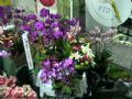 Royal International Flower Design preview 3