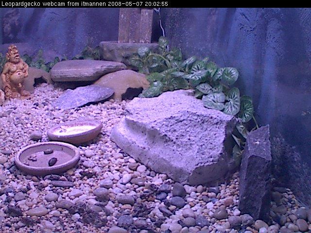 Leopardgecko webcam photo 2