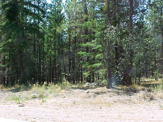 Peachland Live WebCam photo 6