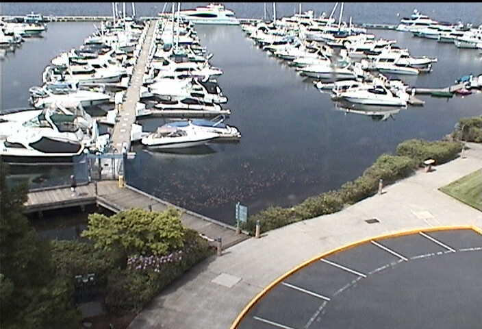 Carillon Point - Yacht Club photo 1