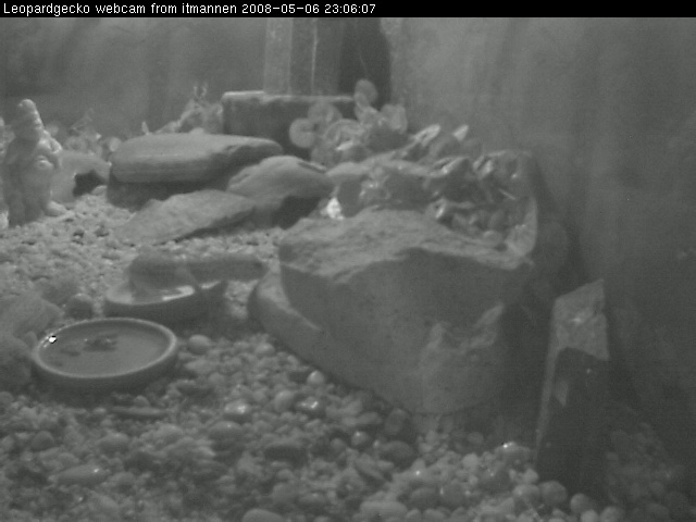 Leopardgecko webcam photo 3
