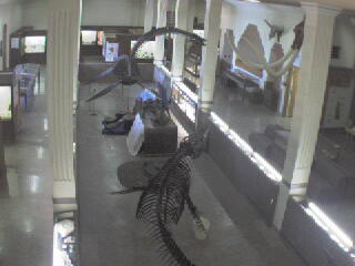 Museum of Geology - Dino Cam photo 4