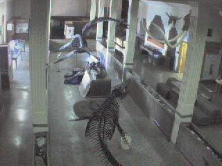Museum of Geology - Dino Cam photo 5