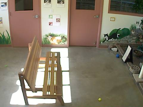 DogsAspen - Cat Room Cam photo 4