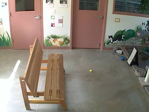 DogsAspen - Cat Room Cam photo 5