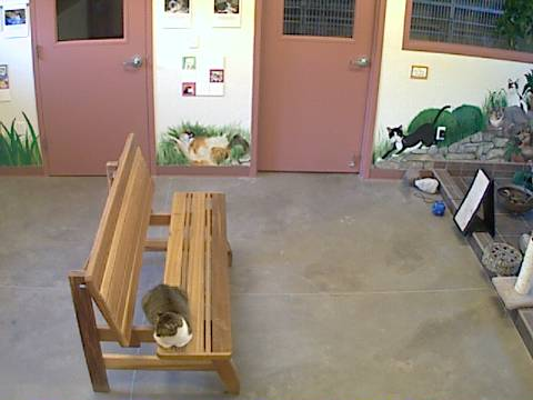 DogsAspen - Cat Room Cam photo 3