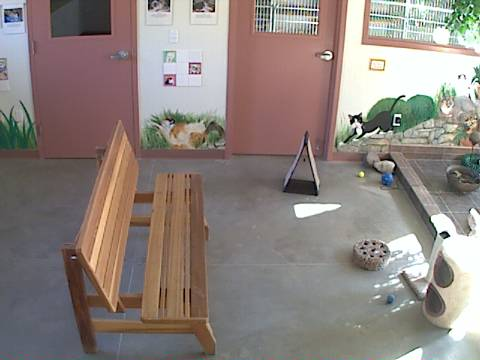 DogsAspen - Cat Room Cam photo 2