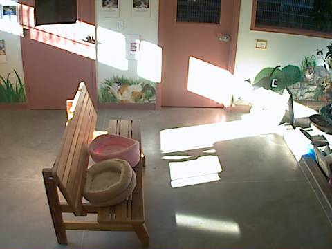 DogsAspen - Cat Room Cam photo 1