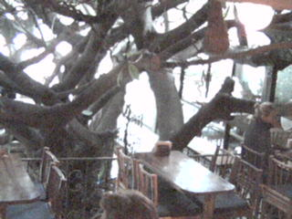 Tree House Restaurant photo 4