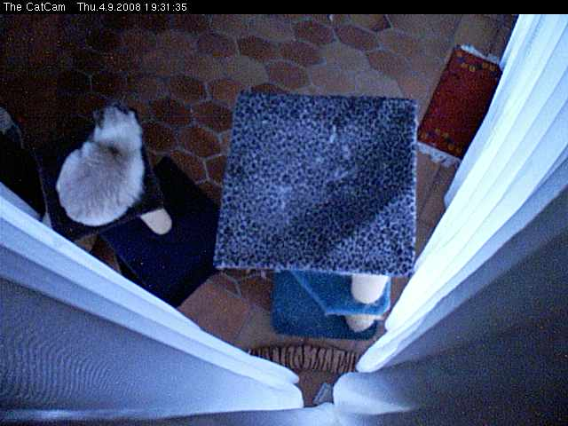 The CatCam photo 3