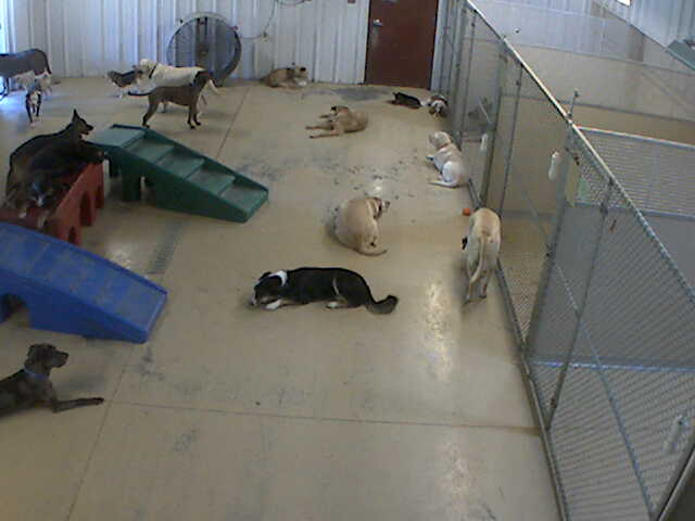 Pet Lodge of Clifton Park - Doggie Daycare 3 photo 6