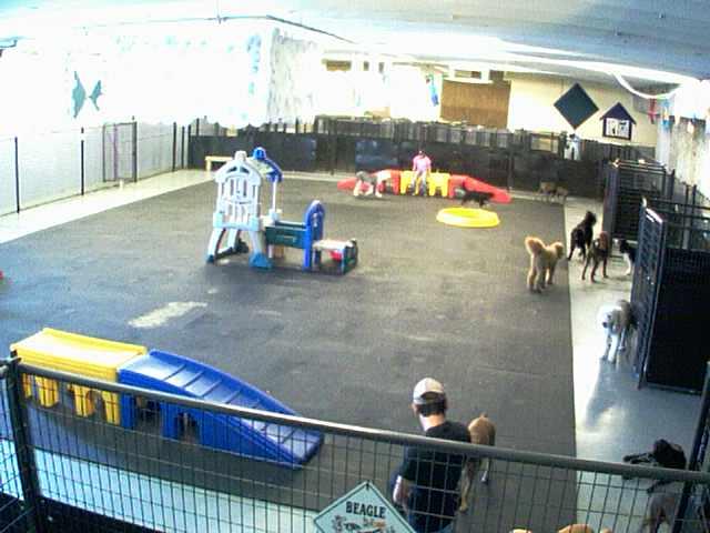Lucky Dog Resort - Inside Play Area - Camera 1 photo 1