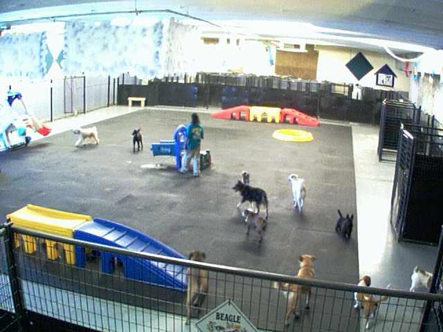 Lucky Dog Resort - Inside Play Area - Camera 1 photo 2