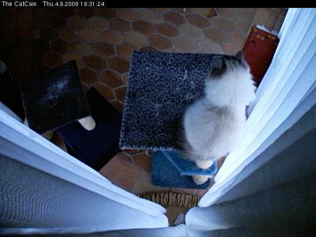 The CatCam photo 2