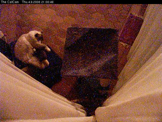 The CatCam photo 4