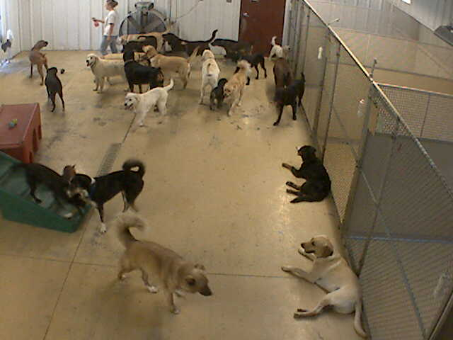 Pet Lodge of Clifton Park - Doggie Daycare 3 photo 4