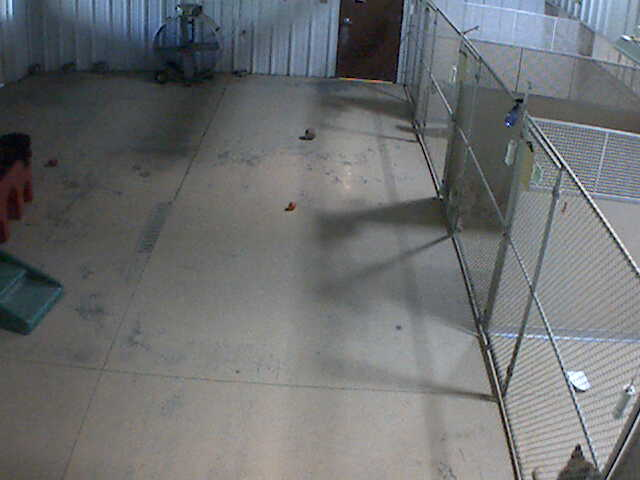 Pet Lodge of Clifton Park - Doggie Daycare 3 photo 1