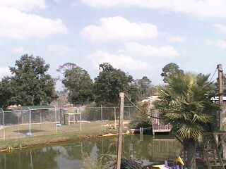 Alabama Gulf Coast Area - Zoo Cam photo 2