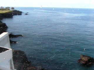 Sheraton - Keauhou Bay Resort & Spa photo 4