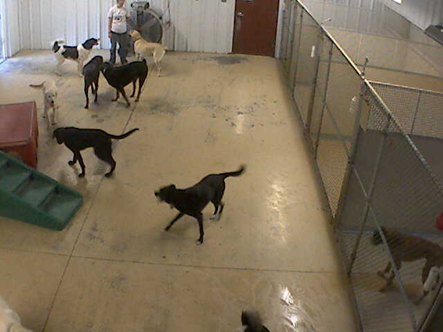 Pet Lodge of Clifton Park - Doggie Daycare 3 photo 2