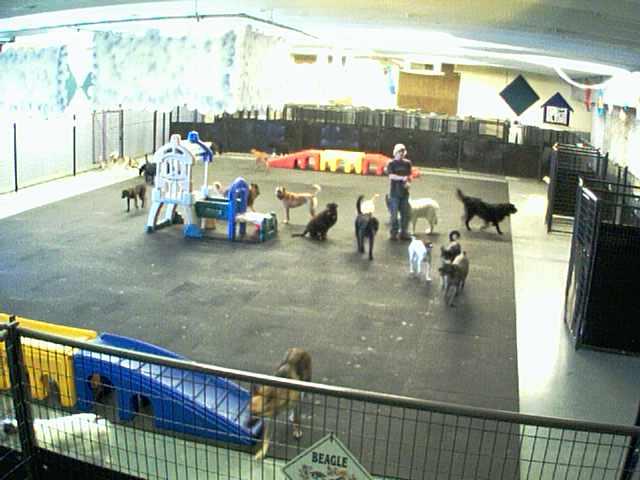 Lucky Dog Resort - Inside Play Area - Camera 1 photo 3