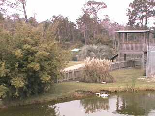 Alabama Gulf Coast Area - Zoo Cam photo 5