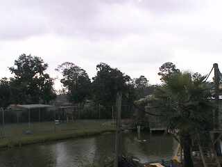 Alabama Gulf Coast Area - Zoo Cam photo 4
