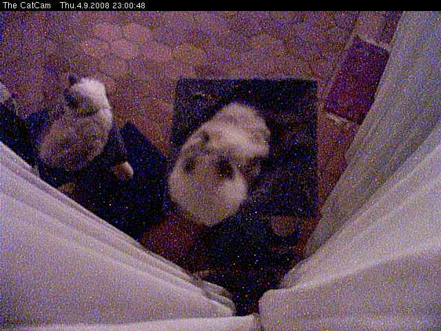 The CatCam photo 5
